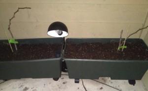 EarthBox Container Garden