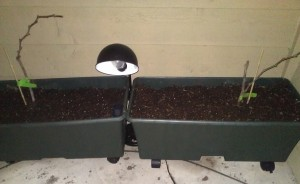 EarthBox Container Garden